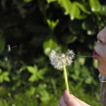 child-blowing-dandilion